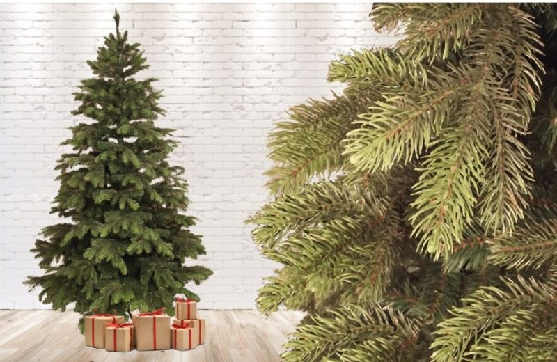 Christmas trees wholesale